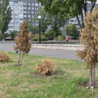 В Гомельской области заново посадят более 18 тысяч деревьев