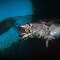 Благостный бычок и кальмар в угаре диско. Лучшие подводные фото 2020