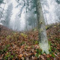 Зелёное сердце Могилева сохранят. Печёрский лесопарк станет заказником местного значения