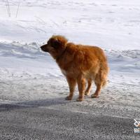 Хатико из-под Докшиц. Как собака девятый год ждет своего хозяина на дороге