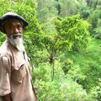 Индонезиец в одиночку высадил 11 тысяч деревьев и превратил засушливые холмы в оазис