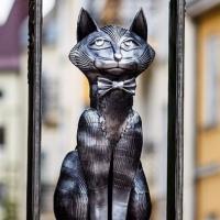 Мурлыкающий Зеленоградск. Как старинный прусский городок превратился в столицу кошек
