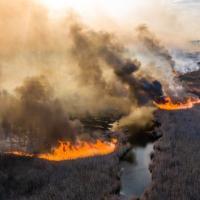 Горящие поля отчуждения. Чем грозят пожары у ЧАЭС?