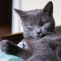 Большой кот следит за тобой. Как не быть жестоким с животными?