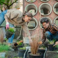 Во Львове обустроили первый общественный дождевой сад