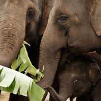 В Сиднее открывают новый зоопарк – первый за 100 лет. Зачем они сейчас нужны?