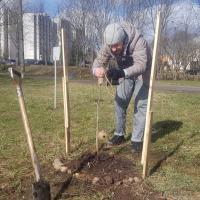 «Зелёный двор вместе!» со второго раза. Как горожанин и ЖКХ наконец посадили деревья