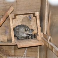 Свиньи доедали за всеми. Интервью с бывшим работником контактного зоопарка о том, где заканчивается развлечение и начинаются страдания животных