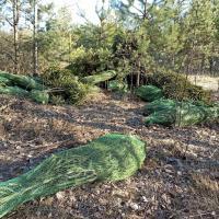 Рождественские ёлки в упаковке нашли в лесу под Минском. Фотофакт