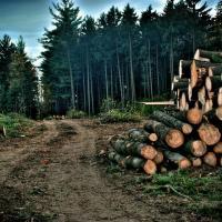 Компромиссы растущего мира. Причины, последствия и решения против обезлесения