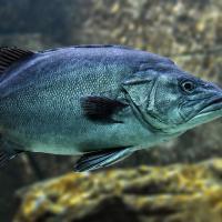 Исследователи: Рыба теряет способность различать запахи