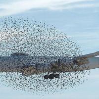 Для защиты птиц в небе предлагают создать воздушные заповедники