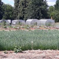 «Мы вложили средства не в картошку и капусту, а в экологическое образование». В беларусских школах начали изучать органическое сельское хозяйство