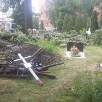 В Минске благоустраивают Военное кладбище. Планируется спилить два десятка деревьев