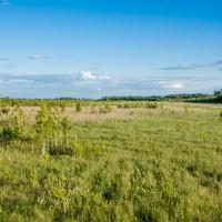 Ольманы: будущее крупнейшего болотного комплекса Европы в вопросах и ответах