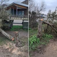 «Маньяк» с бензопилой месяц рубил деревья в британской провинции