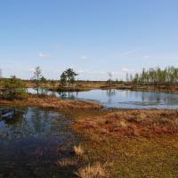 На первый-второй рассчитайсь! В Беларуси проведут перепись болот