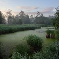 Святое болото расширят, а водохранилище в районе ГЭС приведут в порядок