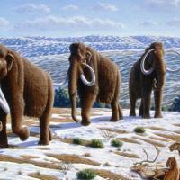 Власти Якутии планируют заселить тундру мамонтами