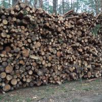Теряет ли Беларусь свои леса?