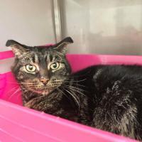 В Нидерландах кот выжил, проведя 52 дня в запертом доме без еды
