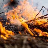 Беларусь полной прожарки. Кто остановит пожары в экосистемах страны?