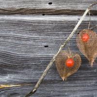 Закон об органическом сельском хозяйстве подписан, но пока не действует