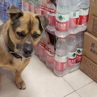 В Ухане пес три месяца ждал в больнице своего хозяина, который умер от коронавируса