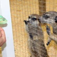 С 1 января в России запрещены контактные зоопарки