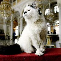Коты Эрмитажа получат наследство из Франции