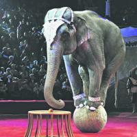 Минприроды поддержало петицию о запрете использования диких животных в цирке. И в этом есть лукавство