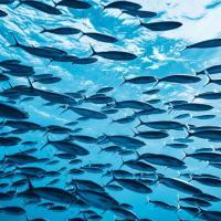 За 50 лет исчезло 76% мигрирующих пресноводных рыб