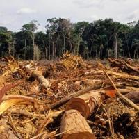 В 2019 году было убито рекордное число экоактивистов