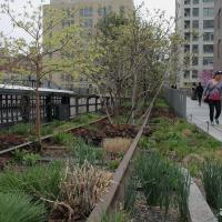 Зелень вместо промзоны: где в Минске можно разбить вертикальный парк, как в Нью-Йорке?