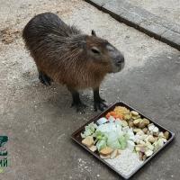 В Минском зоопарке поселился Капибарин
