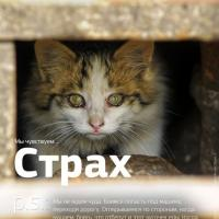 «Мы чувствуем...» — в России появилась трогательная социальная реклама о бездомных животных