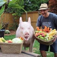 Как свинья Эстер стала домашним питомцем и пропагандирует вегетарианство в соцсетях