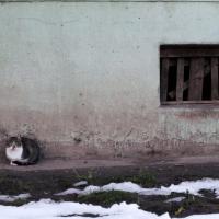 Как помочь бездомному животному и не навредить себе?