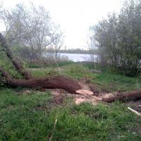 Вдоль Мухавца в Бресте вырубили 107 деревьев
