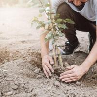 Блогеры собрали $20 млн на посадку 20 млн деревьев. Среди доноров: Илон Маск и гендиректор YouTube