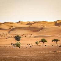 В бесплодных пустынях растут миллионы деревьев — исследование