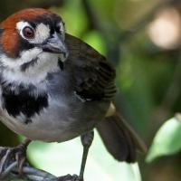 Искусственный интеллект научился определять птиц по одной фотографии