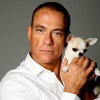 Жан-Клод Ван Дамм спас болгарского щенка чихуахуа. И это не шутка!
