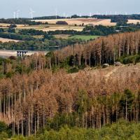 Леса в ФРГ страдают от засухи, ураганов и короедов