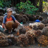 Посевная катастрофа. Как пальмовое масло влияет на окружающую среду?