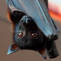 Макаки, панголины, летучие мыши: почему ученые до сих пор не нашли вид-хозяина COVID-19