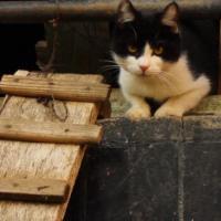 Котопункт для котоморд: как сделать город комфортным для бездомных животных