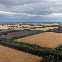 Почему лесхозам следует заняться не ландшафтным дизайном, а защитным лесоразведением?