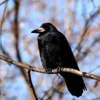 Весна близко! Перелетные птицы возвращаются в Беларусь
