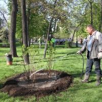 Оторвись от смартфона и полей дерево. Как мобильные приложения помогают в уходе за городскими лесами, парками и скверами